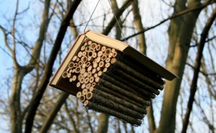 The Bee Libraries